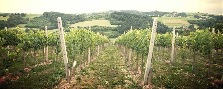 Degustacja win z winnicy Chodorowa